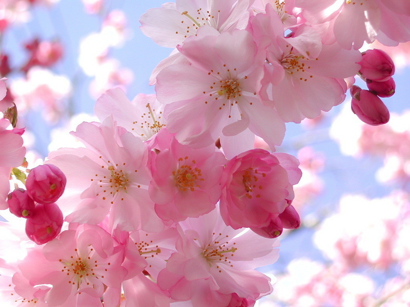 spring-flowers-pink-pretty