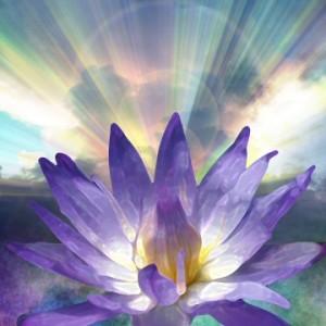 lotus_light