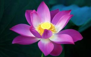2012-mother-s-day-beautiful-flower-purple-flower_2560x1600_97329
