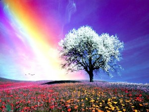 Rainbow-Nature-White-HD