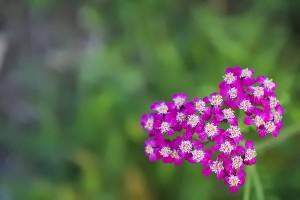 20091105014848_love nature