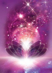 lotus-light-gratitude